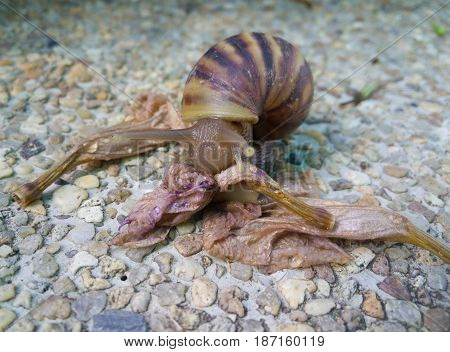 close up of the snail eating flowers scrap