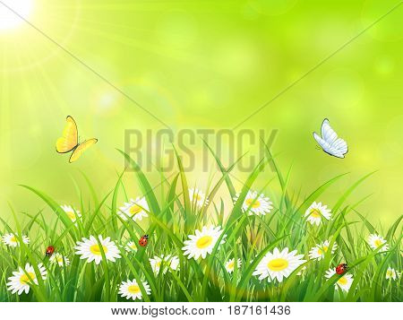 Sunny green sky background. Butterflies flying above the grass and flowers, illustration.