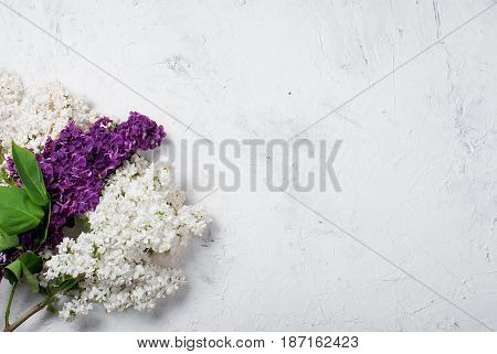 Bouquet Of White And Purpul Lilac On Concrete White Background