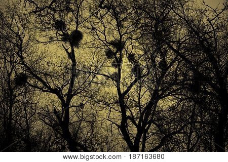 Silhouettes of trees on a yellow background, bird's nests. Dark abstract background, the mystical nature