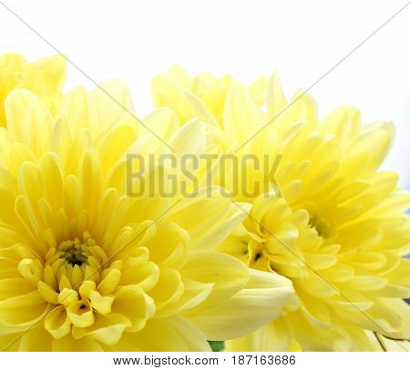 Flowers  on a clear day, in the rays of a warm sun, use as background