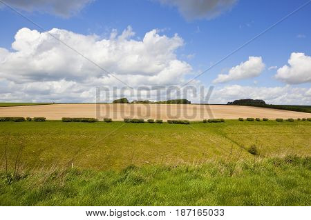 Green Grazing Pasture