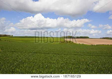 Woodland And Wheat Fields