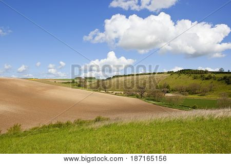 Cultivated Soil And Meadows