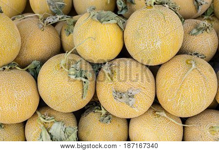 Melons on the counter for sale in a vegetable shop. Melons background. Horizontal. Crop.