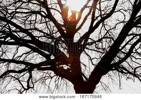 Sunlight breaks through a solitary tree in spring