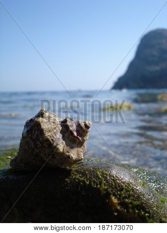 Sea shell with sea and blue sky on background. shell on a wet stone