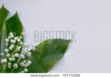 Lily of the valley. White spring flowers.