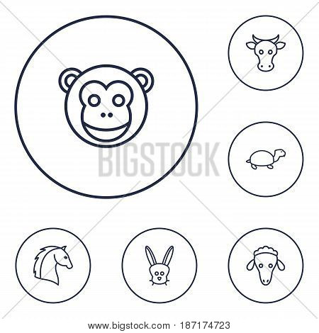 Set Of 6 Beast Outline Icons Set.Collection Of Turtle, Horse, Cow And Other Elements.