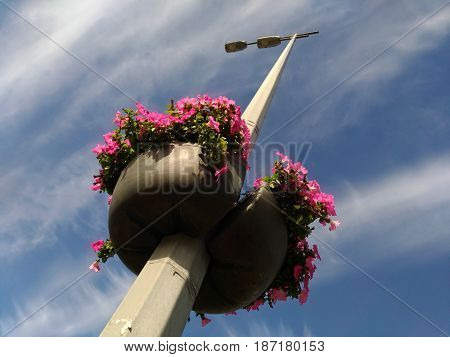 Baskets of purple flowers on a street lamp against the beautiful sky. Hanging baskets with flowers on the lamppost