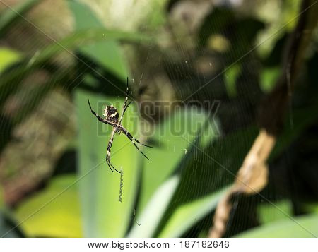 Spider garden insect wildlife nature Brazil close-up focus
