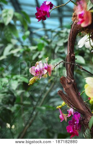 Part of a tree branch and red flowers growing around with a shallow depth of field