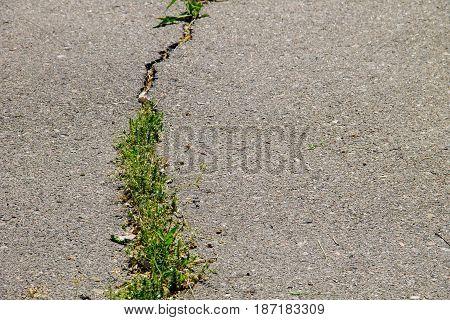 Green Plants Growing In Cracked Asphalt Road Texture