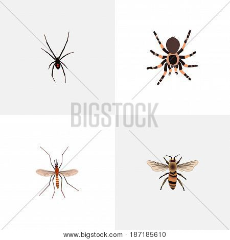 Realistic Gnat, Spinner, Wisp And Other Vector Elements. Set Of Insect Realistic Symbols Also Includes Alive, Tarantula, Arachnid Objects.