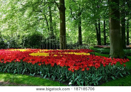 Flower bed of yellow and red tulips in the shade of trees in the Keukenhof Park