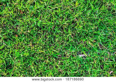Green Fresh Nature Grass Background