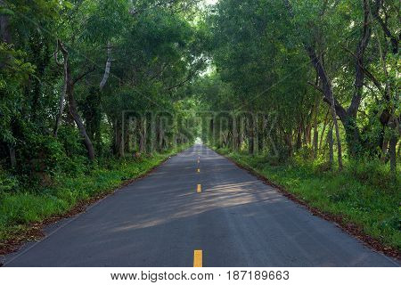 Empty asphalt countryside road through tunnel of trees with sunlight
