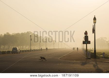 morning scene of rajpath road in winter time this road way to India gate.