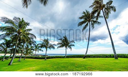 Palm trees in the wind under cloudy sky at Ko Olina on the West Coast of the Hawaiian island of Oahu