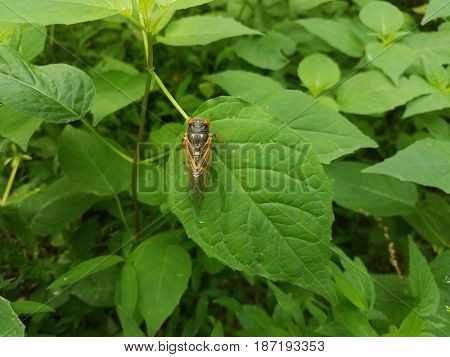 green plant in the forest with cicada on a leaf