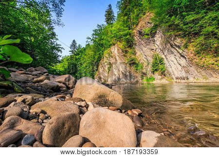 Trees Near The River In Mountains