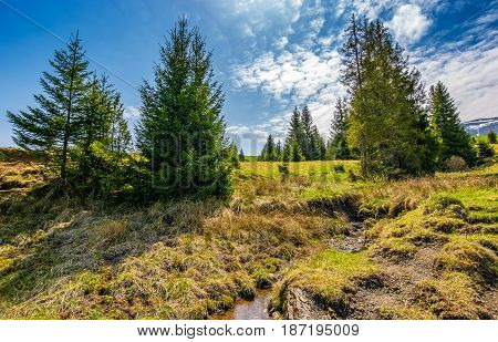 Mountain Stream Among The Forest On Meadow