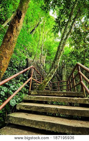 Concrete stairs with steel rail for studying the wild nature.