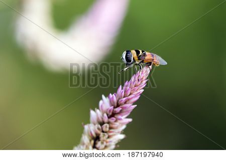 Image of bee perched on flower on nature background. Insect Animals.