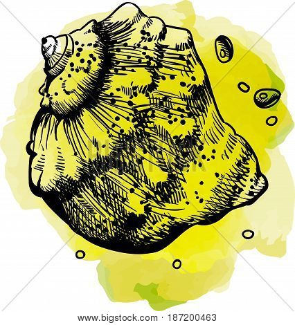 Finest quality beautiful natural open shell close up realistic single valuable object image vector illustration on the yellow background