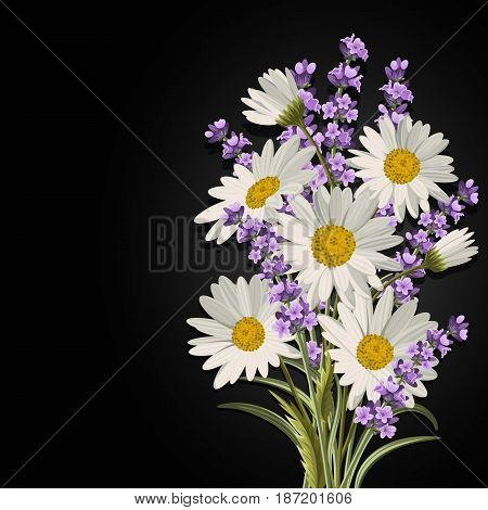 Beautiful daisies and lavender flowers on black background.
