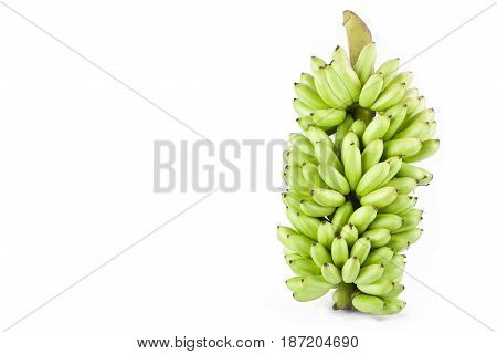 bundle of fresh raw Lady Finger banana  on white background healthy Pisang Mas Banana fruit food isolated
