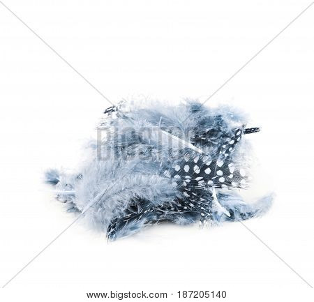 Pile of multiple decorational bird's feathers isolated over the white background
