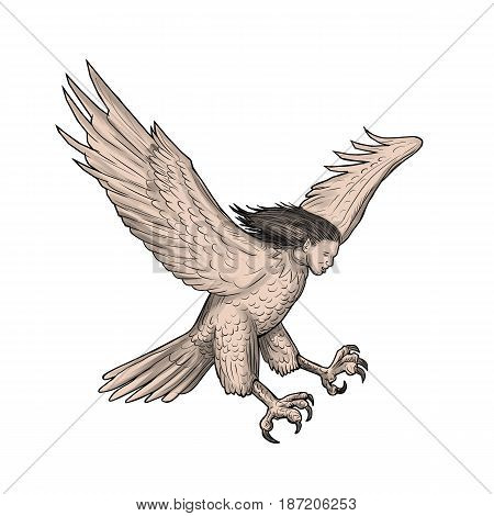 Tattoo style illustration of a harpy in Greek and Roman mythology a female bird with a woman's face swooping looking down viewed from the side set on isolated white background.
