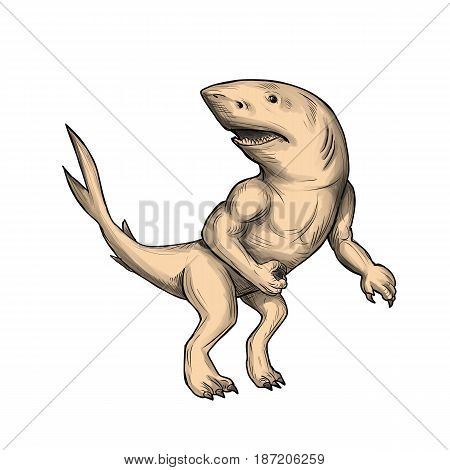 Tattoo style illustration of a Nanaue a mythical creature in Hawaiian Folklore of a humanoid shark with arms and legs looking to the side viewed from front set on isolated white background.