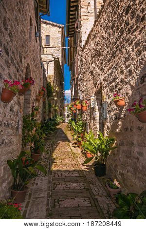 Historic narrow in the center of Spello village
