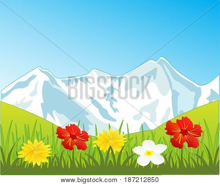 Alpine glade with flower and mountains covered by snow