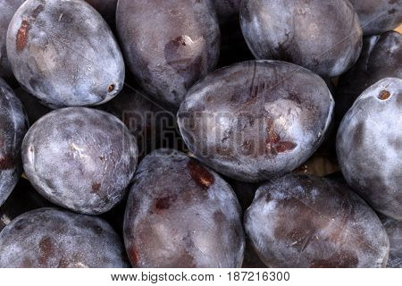 image of many blue plum at day