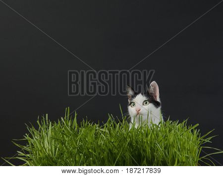 the kitten sits in a wheat germ