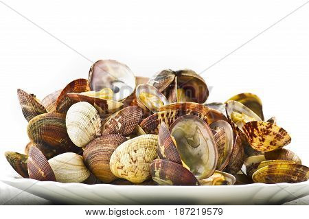Fresh Clams cooked close up on white