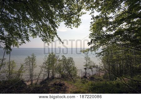 View from springtime beech forest to the sea. Little Belt Fredericia Denmark.