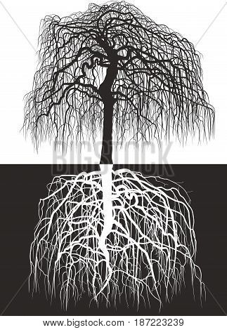 Vector illustration of Wisteria tree along with roots