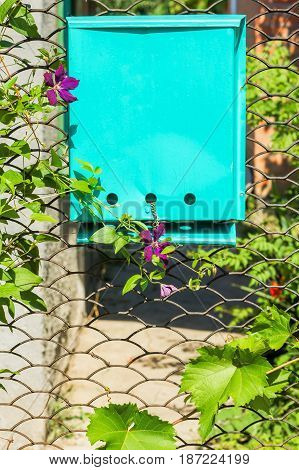 Lattice garden gate with a mailbox twined with grapes and clematis on a sunny summer day