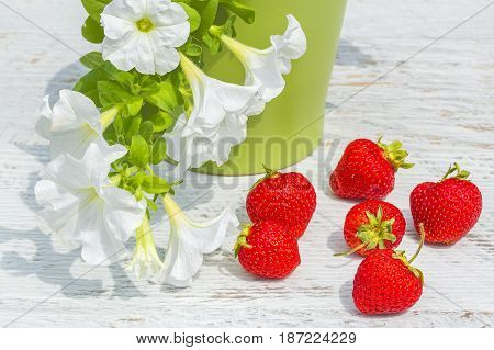Red ripe strawberry and white petunia in a green flowerpot on a white wooden table in a summer garden close-up