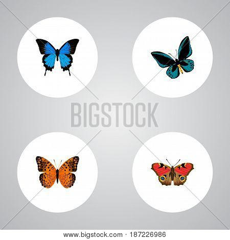 Realistic Common Blue, Demophoon, American Painted Lady And Other Vector Elements. Set Of Moth Realistic Symbols Also Includes American, Orange, Butterfly Objects.