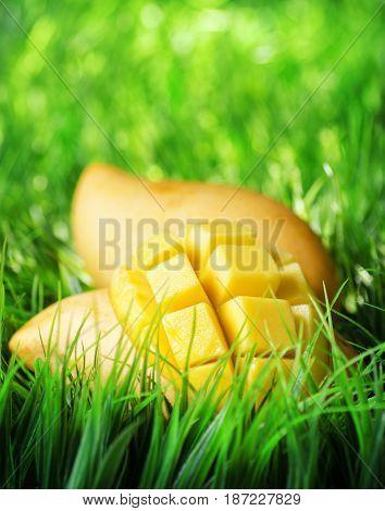 Yellow Mango On Green Grass