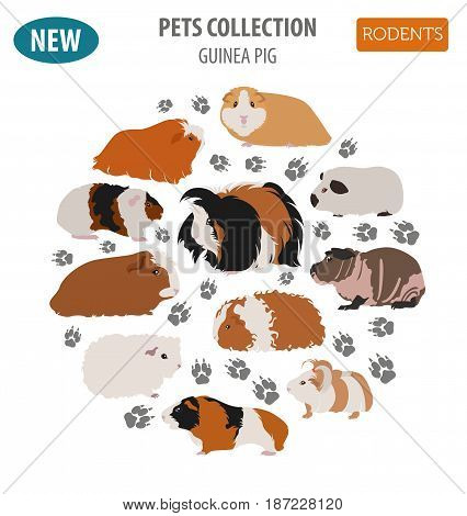 Guinea Pig Breeds Icon Set Flat Style Isolated On White. Pet Rodents Collection. Create Own Infograp