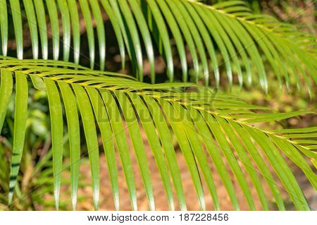 Two Palm Leaves Texture