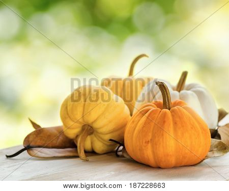 Pumpkins On Green Natural Background