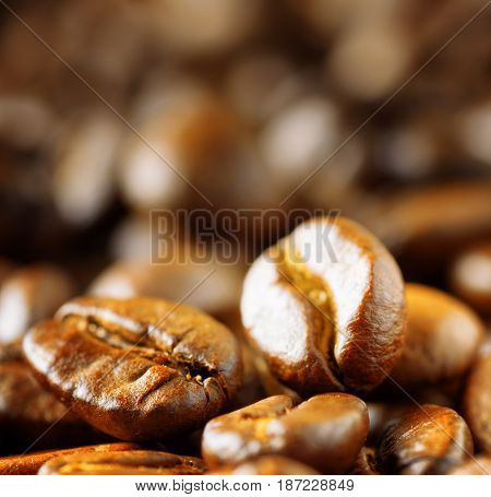 Freshly Roasted Arabica. Closeup View Of Coffee Beans