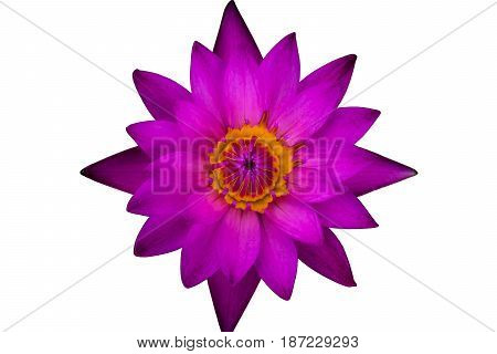 Top view purple lotus and yellow pollen isolated on white background
